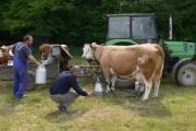Vorschau Beim Melken auf der Weide